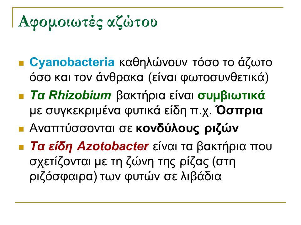 Αφομοιωτές αζώτου Cyanobacteria καθηλώνουν τόσο το άζωτο όσο και τον άνθρακα (είναι φωτοσυνθετικά) Τα Rhizobium βακτήρια είναι συμβιωτικά με συγκεκριμ
