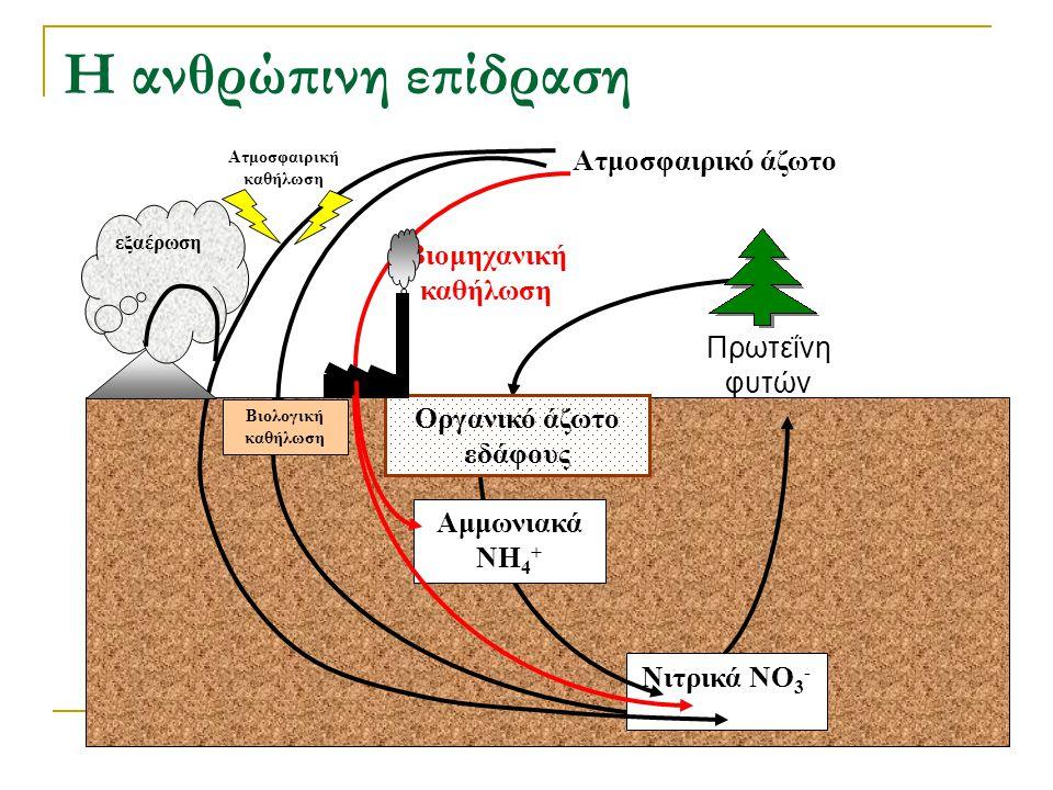 Νιτρικά NO 3 - Ατμοσφαιρική καθήλωση εξαέρωση Πρωτεΐνη φυτών Ατμοσφαιρικό άζωτο Αμμωνιακά NH 4 + Οργανικό άζωτο εδάφους Η ανθρώπινη επίδραση Βιολογική