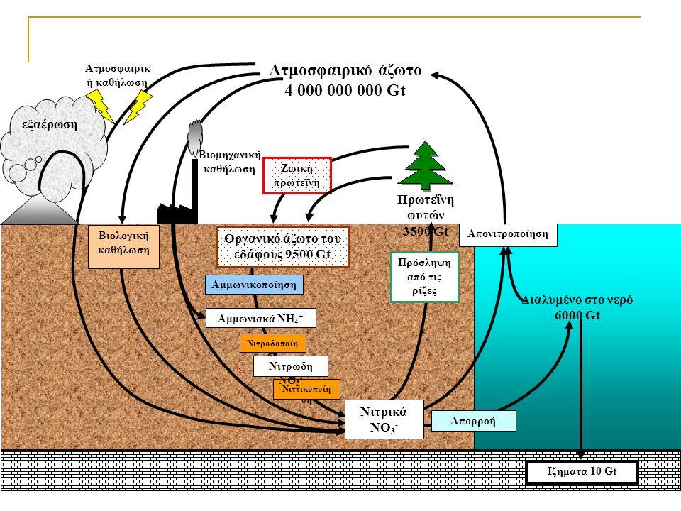 Ιζήματα 10 Gt Νιττικοποίη ση Πρόσληψη από τις ρίζες Βιολογική καθήλωση Νιτροδοποίη ση Αμμωνιακά NH 4 + Αμμωνικοποίηση Νιτρώδη NO 2 - Διαλυμένο στο νερ