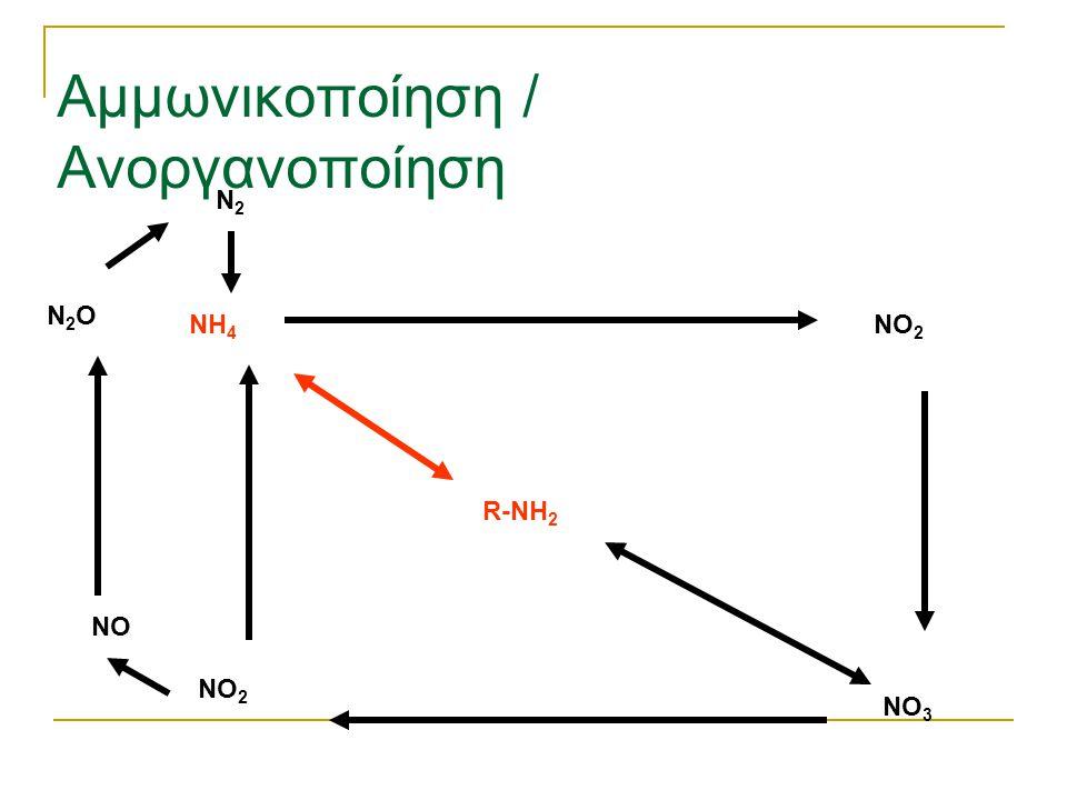 Αμμωνικοποίηση / Ανοργανοποίηση R-NH 2 NH 4 NO 2 NO 3 NO 2 NO N2ON2O N2N2