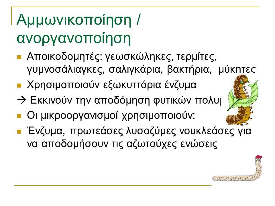 Αμμωνικοποίηση / ανοργανοποίηση Αποικοδομητές: γεωσκώληκες, τερμίτες, γυμνοσάλιαγκες, σαλιγκάρια, βακτήρια, μύκητες Χρησιμοποιούν εξωκυττάρια ένζυμα 
