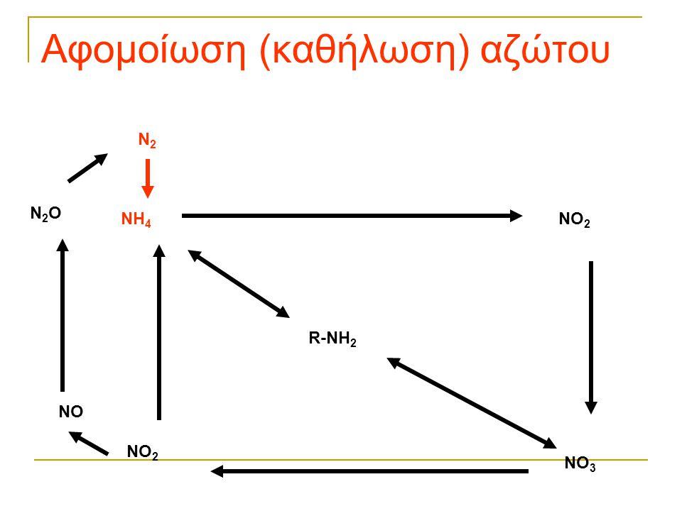 Αφομοίωση (καθήλωση) αζώτου R-NH 2 NH 4 NO 2 NO 3 NO 2 NO N2ON2O N2N2