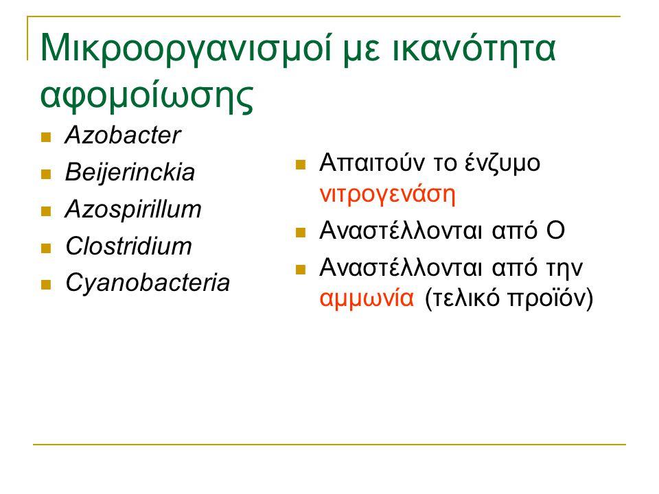 Μικροοργανισμοί με ικανότητα αφομοίωσης Azobacter Beijerinckia Azospirillum Clostridium Cyanobacteria Απαιτούν το ένζυμο νιτρογενάση Αναστέλλονται από