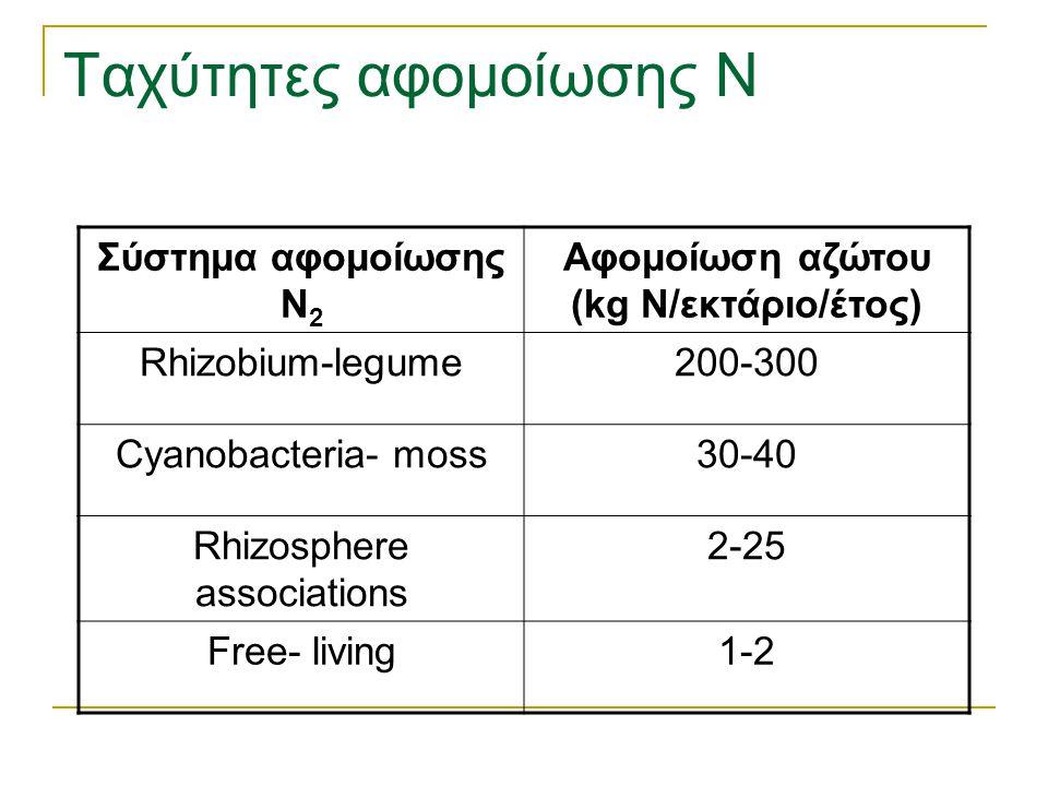 Ταχύτητες αφομοίωσης Ν Σύστημα αφομοίωσης N 2 Αφομοίωση αζώτου (kg N/εκτάριο/έτος) Rhizobium-legume200-300 Cyanobacteria- moss30-40 Rhizosphere associ