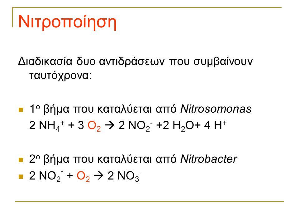 Νιτροποίηση Διαδικασία δυο αντιδράσεων που συμβαίνουν ταυτόχρονα: 1 ο βήμα που καταλύεται από Nitrosomonas 2 NH 4 + + 3 O 2  2 NO 2 - +2 H 2 O+ 4 H +