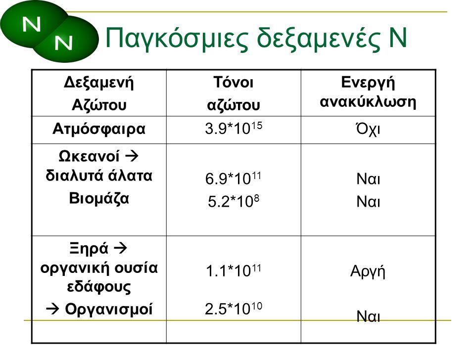 Ο ρόλος του αζώτου Τα φυτά και τα βακτήρια χρησιμοποιούν το άζωτο στις μορφές NH 4 + ή NO 3 - Είναι αποδέκτης ηλεκτρονίων σε αναερόβια περιβάλλοντα Συχνά είναι σε περιορισμένη αναλογία σε εδάφη και νερά περιορίζοντας την ανάπτυξη όλων των οργανισμών που εξαρτώνται από αυτό (συμπεριλαμβανομένων των φυτών που είναι θρεπτικό μακροστοιχείο)