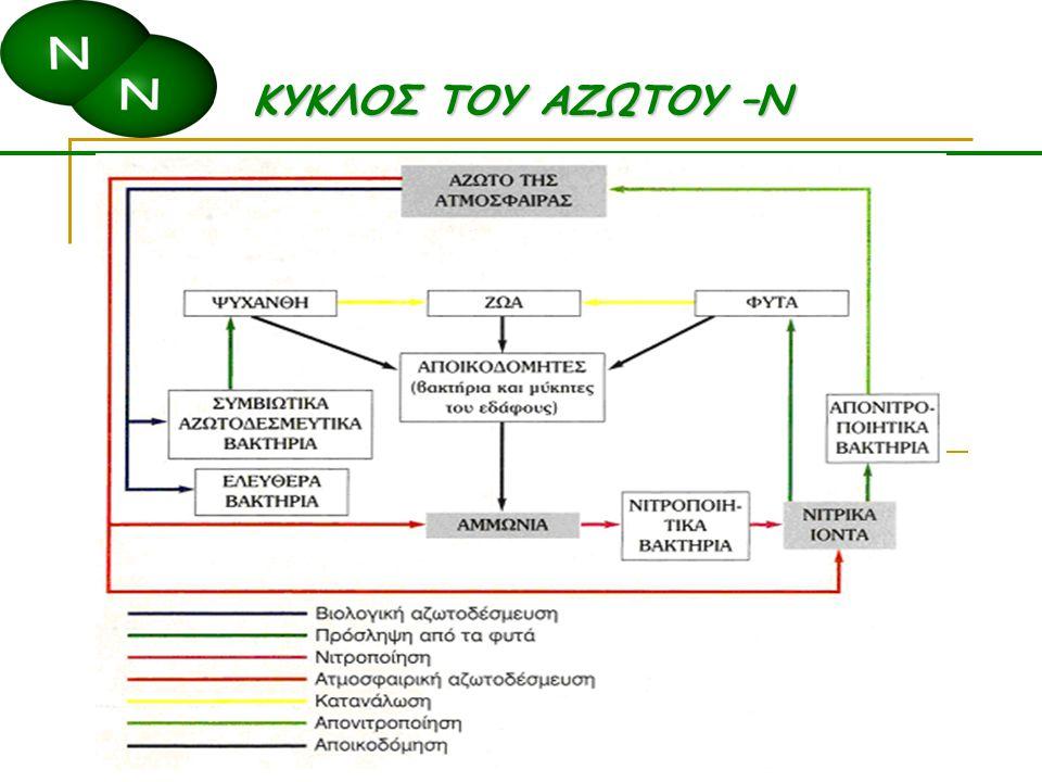 Μέρη του κύκλου του Ν Αμμωνικοποίηση/ανοργανοποίηση Ακινητοποίηση Βιολογική αφομοίωση Νιτροποίηση Απονιτροποίηση