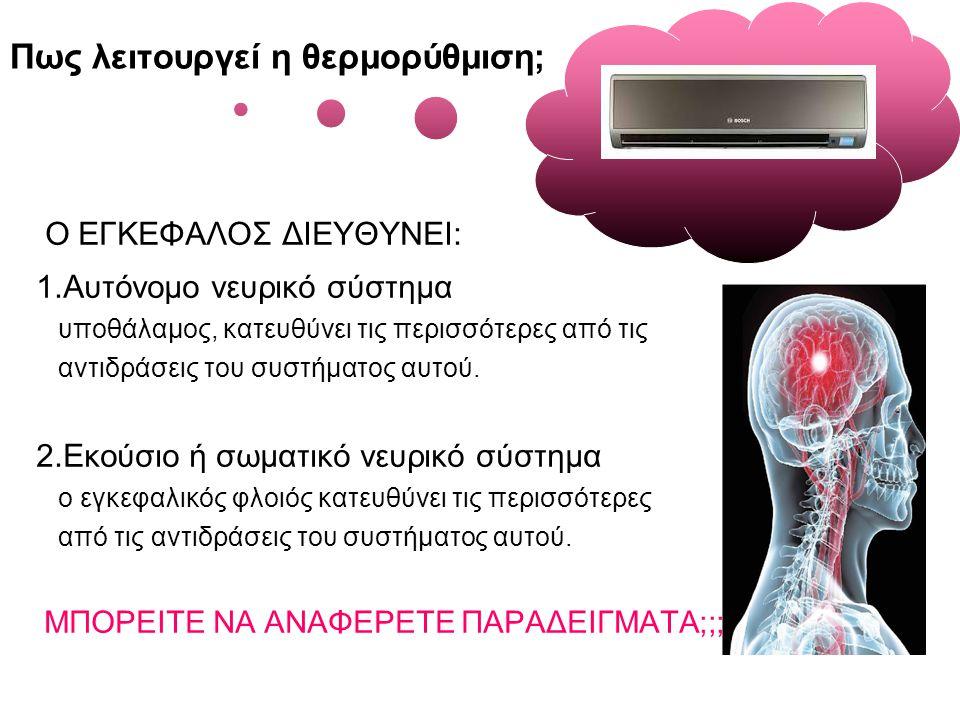 Πως λειτουργεί η θερμορύθμιση; Ο ΕΓΚΕΦΑΛΟΣ ΔΙΕΥΘΥΝΕΙ: 1.Αυτόνομο νευρικό σύστημα υποθάλαμος, κατευθύνει τις περισσότερες από τις αντιδράσεις του συστήματος αυτού.