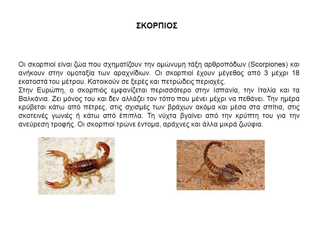 ΣΚΟΡΠΙΟΣ Οι σκορπιοί είναι ζώα που σχηματίζουν την ομώνυμη τάξη αρθροπόδων (Scorpiones) και ανήκουν στην ομοταξία των αραχνίδιων. Οι σκορπιοί έχουν μέ