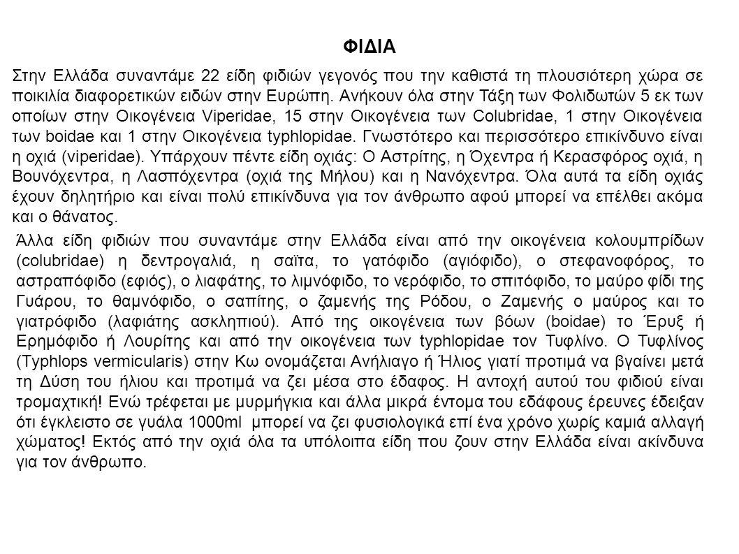 ΦΙΔΙΑ Στην Ελλάδα συναντάμε 22 είδη φιδιών γεγονός που την καθιστά τη πλουσιότερη χώρα σε ποικιλία διαφορετικών ειδών στην Ευρώπη. Ανήκουν όλα στην Τά