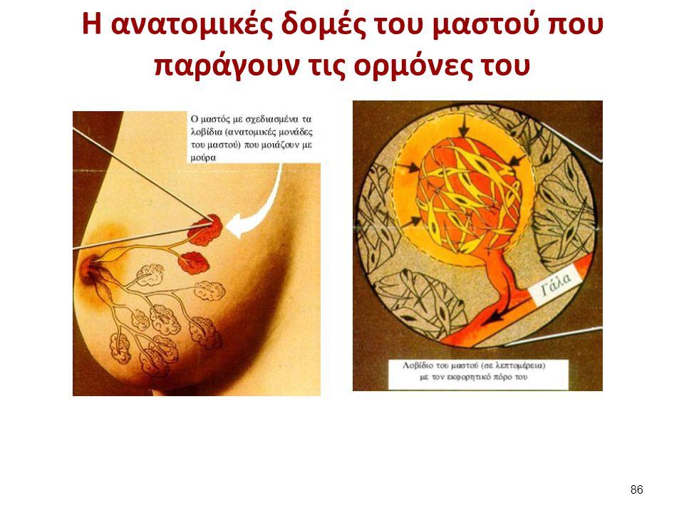 Η ανατομικές δομές του μαστού που παράγουν τις ορμόνες του 86