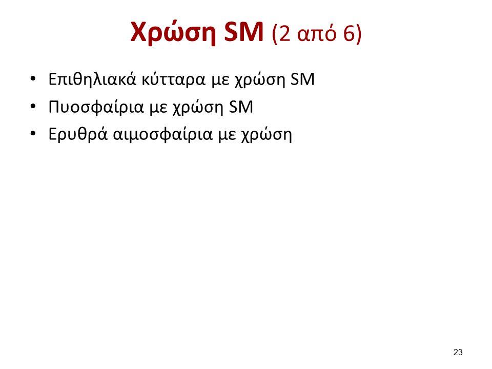 Χρώση SM (2 από 6) Επιθηλιακά κύτταρα με χρώση SM Πυοσφαίρια με χρώση SM Ερυθρά αιμοσφαίρια με χρώση 23