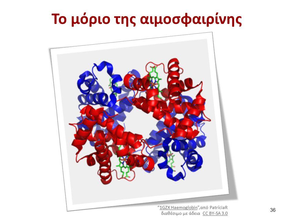 Το μόριο της αιμοσφαιρίνης 1GZX Haemoglobin ,από PatríciaR1GZX Haemoglobin διαθέσιμο με άδεια CC BY-SA 3.0CC BY-SA 3.0 36