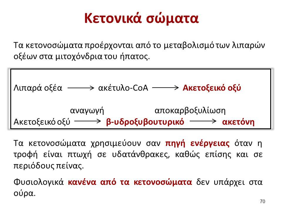 Κετονικά σώματα Τα κετονοσώματα προέρχονται από το μεταβολισμό των λιπαρών οξέων στα μιτοχόνδρια του ήπατος.