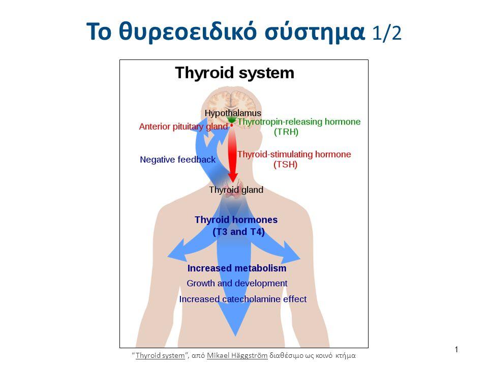 """Το θυρεοειδικό σύστημα 1/2 """"Thyroid system"""", από Mikael Häggström διαθέσιμο ως κοινό κτήμαThyroid systemMikael Häggström 1"""