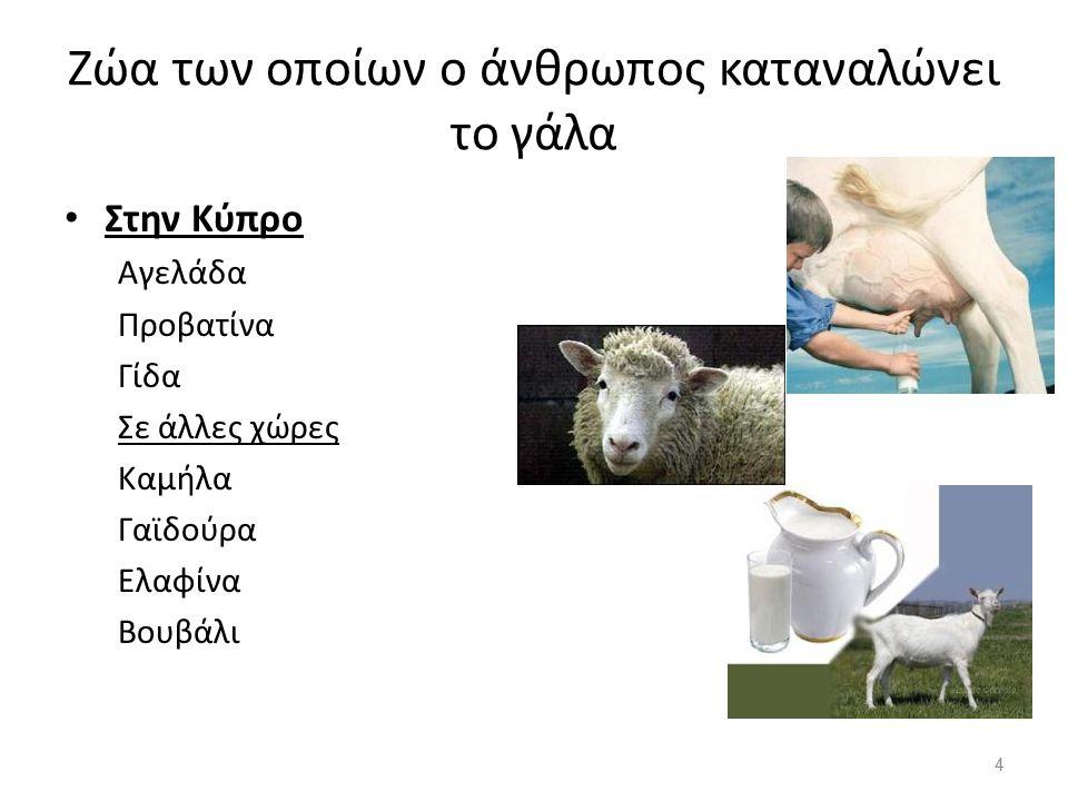Ζώα των οποίων ο άνθρωπος καταναλώνει το γάλα Στην Κύπρο Αγελάδα Προβατίνα Γίδα Σε άλλες χώρες Καμήλα Γαϊδούρα Ελαφίνα Βουβάλι 4