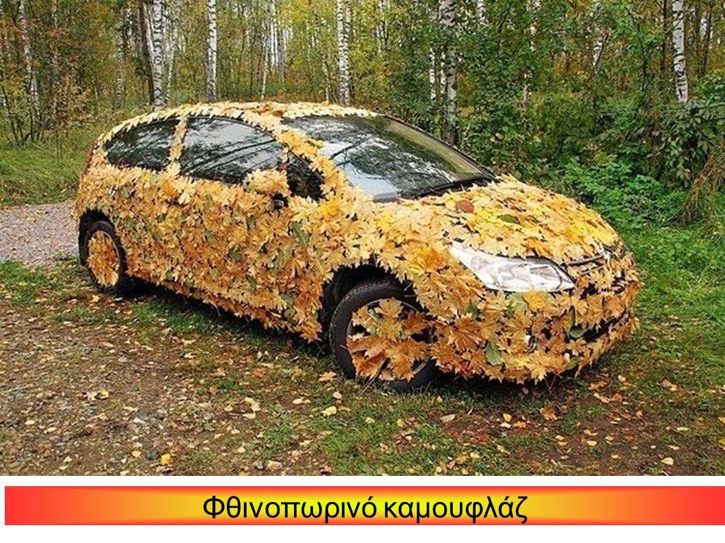Φθινοπωρινό καμουφλάζ