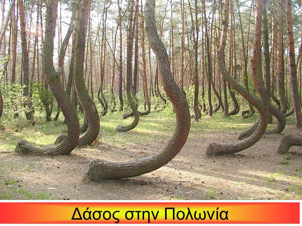 Δάσος στην Πολωνία