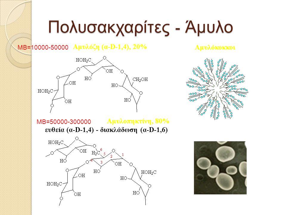 Πολυσακχαρίτες - Άμυλο Αμυλόζη (α-D-1,4), 20% Αμυλοπηκτίνη, 80% ευθεία (α-D-1,4) - διακλάδωση (α-D-1,6) Αμυλόκοκκοι MB=10000-50000 MB=50000-300000