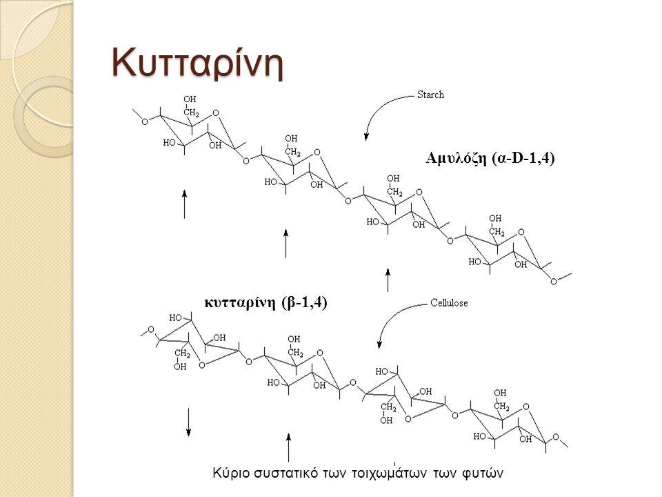 Κυτταρίνη Αμυλόζη (α-D-1,4) κυτταρίνη (β-1,4) Κύριο συστατικό των τοιχωμάτων των φυτών
