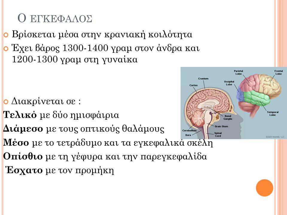 Ο ΕΓΚΕΦΑΛΟΣ Για περιγραφικούς λόγους διαιρείται σε : 2 ημισφαίρια Το στέλεχος Την παρεγκεφαλίδα
