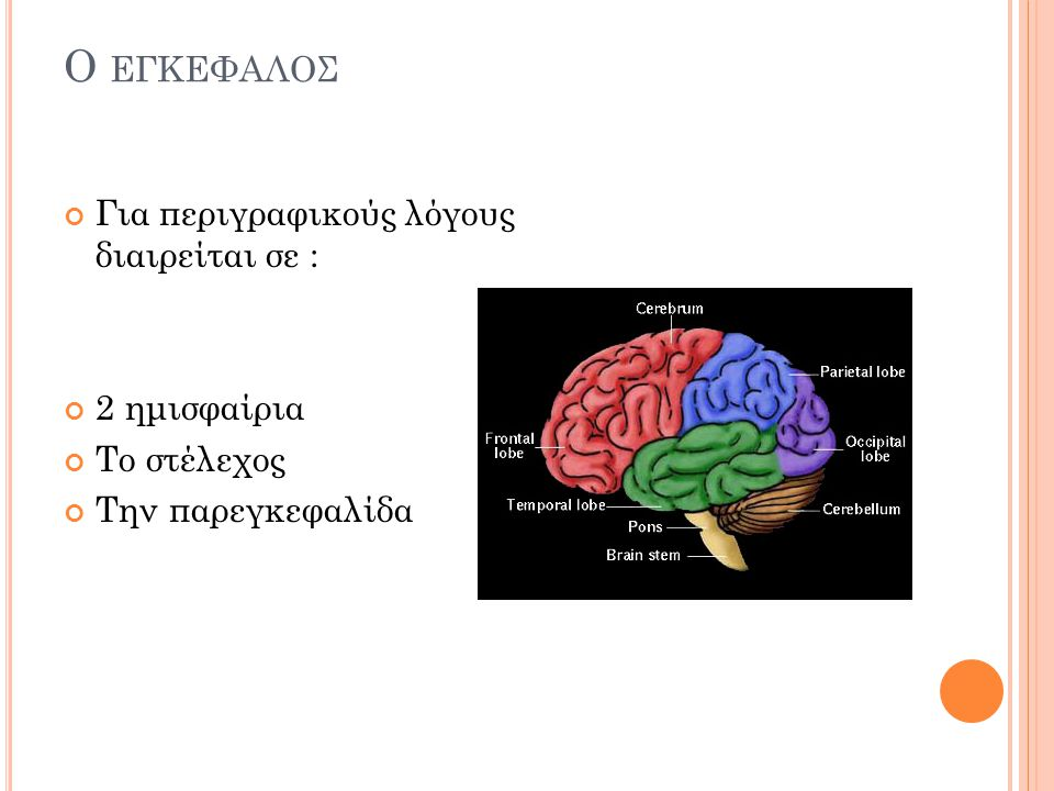 CNS: T HE B RAIN – CAN YOU NAME THESE PARTS ?