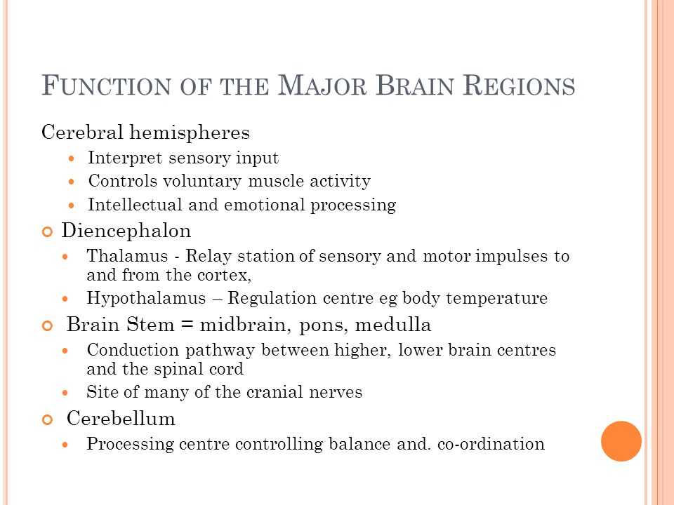 F UNCTION OF THE M AJOR B RAIN R EGIONS Cerebral hemispheres Interpret sensory input Controls voluntary muscle activity Intellectual and emotional pro