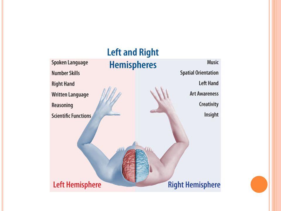 Π ΑΡΕΓΚΕΦΑΛΙΔΑ ( CEREBELLUM ) Η Παρεγκεφαλίδα είναι κεντρικό όργανο το οποίο ρυθμίζει και συντονίζει συνειδητές και αυτόματες κινήσεις του σώματος και εξασφαλίζει την ισορροπία του σε στάση και κίνηση.