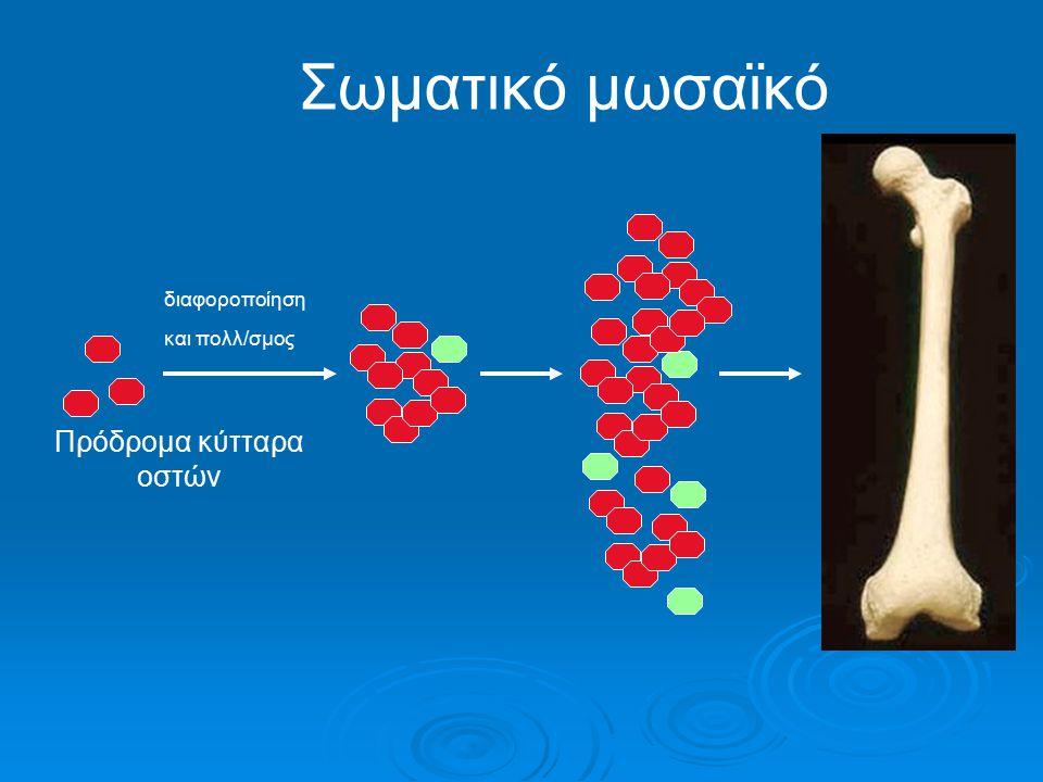 Σωματικό μωσαϊκό διαφοροποίηση και πολλ/σμος Πρόδρομα κύτταρα οστών