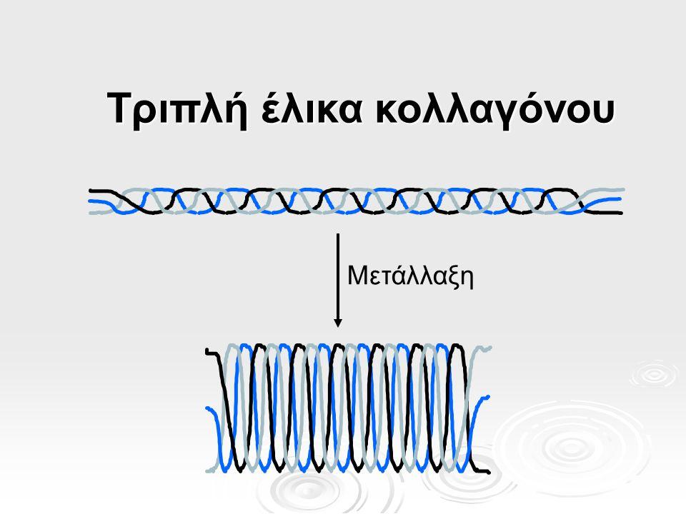 Τριπλή έλικα κολλαγόνου Μετάλλαξη