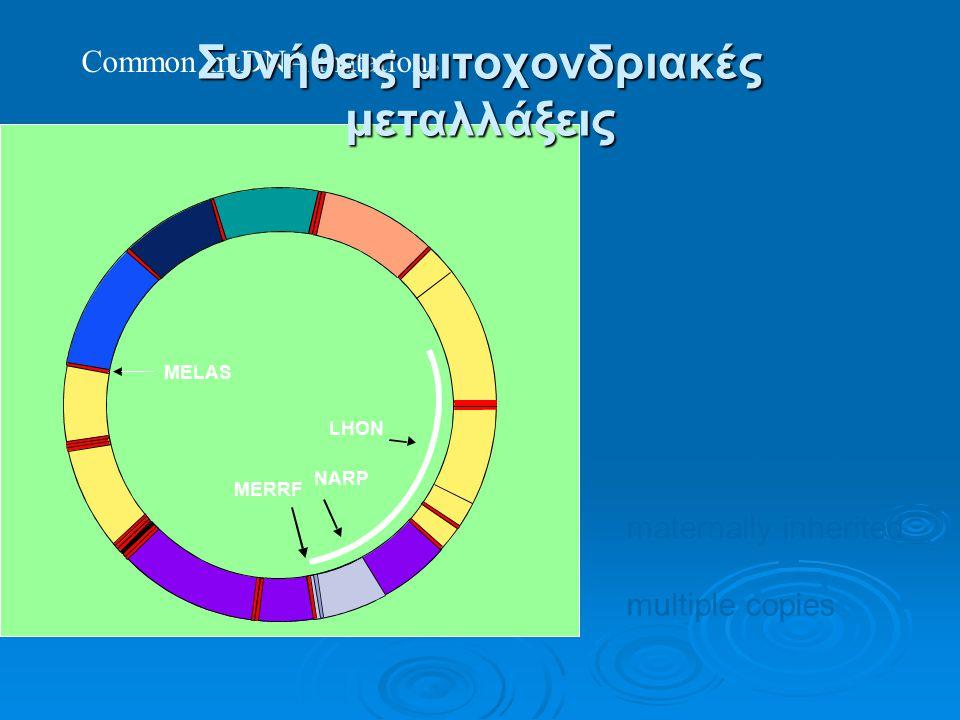 MELAS MERRF NARP LHON 16 569 base pairs maternally inherited multiple copies Common mtDNA mutations Συνήθεις μιτοχονδριακές μεταλλάξεις