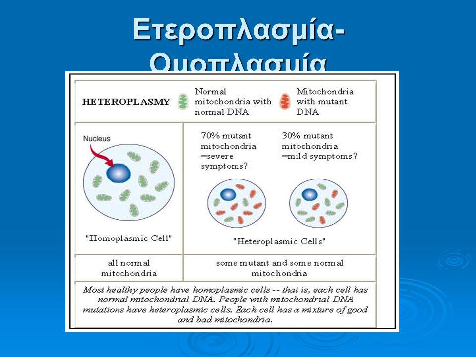 Ετεροπλασμία- Ομοπλασμία