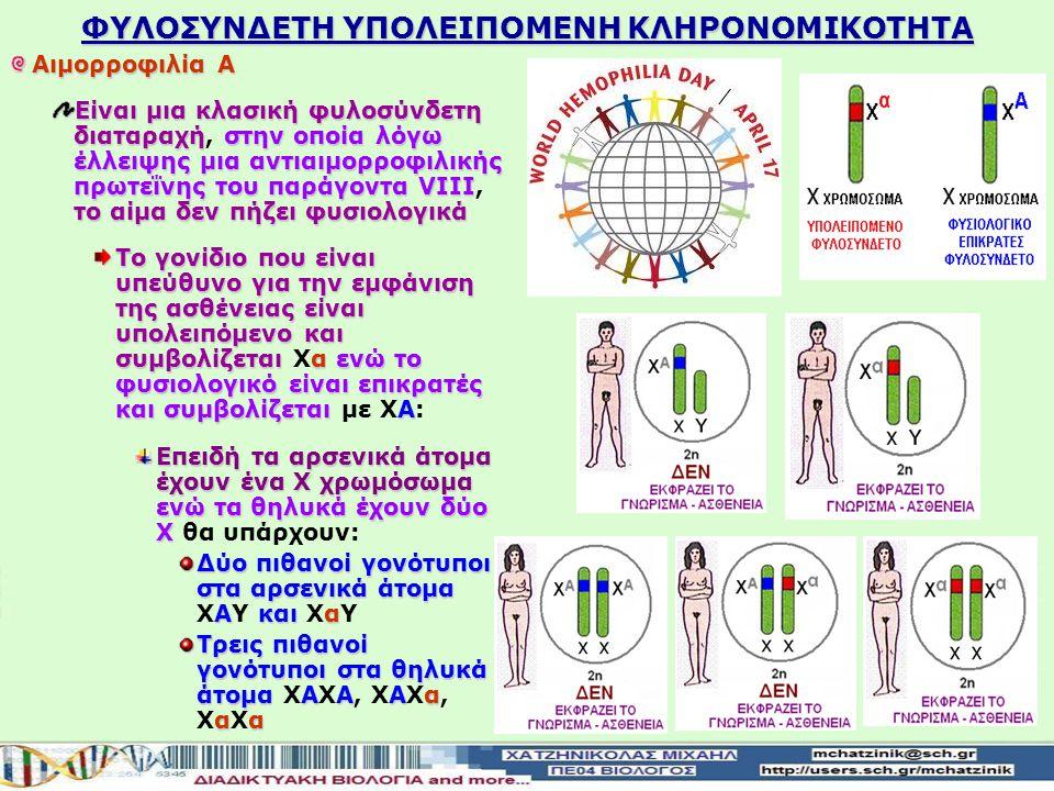 Οι ασθένειες που κληρονομούνται με τον υπολειπόμενο φυλοσύνδετο τρόπο κληρονομικότητας καθορίζονται από τα φυλοσύνδετα αλληλόμορφα που βρίσκονται στο Χ χρωμόσωμα και δεν έχουν αλληλόμορφα στο Υ χρωμόσωμα Το γονίδιο που είναι υπεύθυνο για την εμφάνιση της ασθένειας είναι υπολειπόμενο και συμβολίζεται α ενώ το φυσιολογικό είναι επικρατές και συμβολίζεται Α Το γονίδιο που είναι υπεύθυνο για την εμφάνιση της ασθένειας είναι υπολειπόμενο και συμβολίζεται Χα ενώ το φυσιολογικό είναι επικρατές και συμβολίζεται με ΧΑ Η φυλοσύνδετη υπολειπόμενη ασθένεια εκδηλώνεται: γυναίκες ομόζυγα άτομαααέχουν κληρονομήσει ένα παθολογικό αλληλόμορφο α από κάθε γονέα Στις γυναίκες στα ομόζυγα άτομα (ΧαΧα), τα οποία έχουν κληρονομήσει ένα παθολογικό αλληλόμορφο Χα από κάθε γονέα άνδρεςέχουν κληρονομήσει ένα παθολογικό αλληλόμορφο α από τη μητέρα τουςα Στους άνδρες μόνον αν έχουν κληρονομήσει ένα παθολογικό αλληλόμορφο Χα από τη μητέρα τους (ΧαΥ) ΦΥΛΟΣΥΝΔΕΤΗ ΥΠΟΛΕΙΠΟΜΕΝΗ ΚΛΗΡΟΝΟΜΙΚΟΤΗΤΑ
