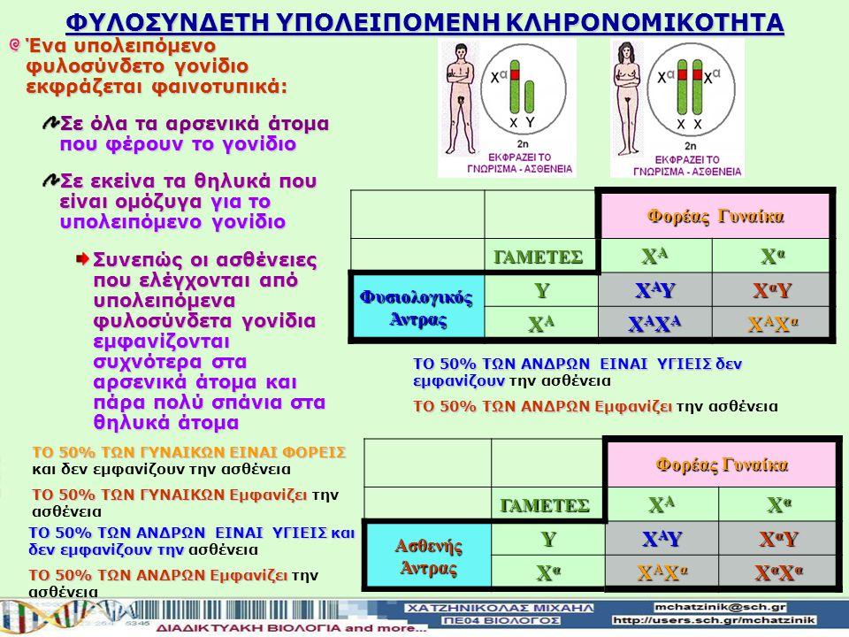 Αιμορροφιλία Α Είναι μια κλασική φυλοσύνδετη διαταραχή στην οποία λόγω έλλειψης μια αντιαιμορροφιλικής πρωτεΐνης του παράγοντα VIII το αίμα δεν πήζει φυσιολογικά Είναι μια κλασική φυλοσύνδετη διαταραχή, στην οποία λόγω έλλειψης μια αντιαιμορροφιλικής πρωτεΐνης του παράγοντα VIII, το αίμα δεν πήζει φυσιολογικά Το γονίδιο που είναι υπεύθυνο για την εμφάνιση της ασθένειας είναι υπολειπόμενο και συμβολίζεται α ενώ το φυσιολογικό είναι επικρατές και συμβολίζεται Α Το γονίδιο που είναι υπεύθυνο για την εμφάνιση της ασθένειας είναι υπολειπόμενο και συμβολίζεται Χα ενώ το φυσιολογικό είναι επικρατές και συμβολίζεται με ΧΑ: Επειδή τα αρσενικά άτομα έχουν ένα Χ χρωμόσωμα ενώ τα θηλυκά έχουν δύο Χ Επειδή τα αρσενικά άτομα έχουν ένα Χ χρωμόσωμα ενώ τα θηλυκά έχουν δύο Χ θα υπάρχουν: Δύο πιθανοί γονότυποι στα αρσενικά άτομα Α και α Δύο πιθανοί γονότυποι στα αρσενικά άτομα ΧΑΥ και ΧαΥ Τρεις πιθανοί γονότυποι στα θηλυκά άτομα ΑΑΑα αα Τρεις πιθανοί γονότυποι στα θηλυκά άτομα ΧΑΧΑ, ΧΑΧα, ΧαΧα