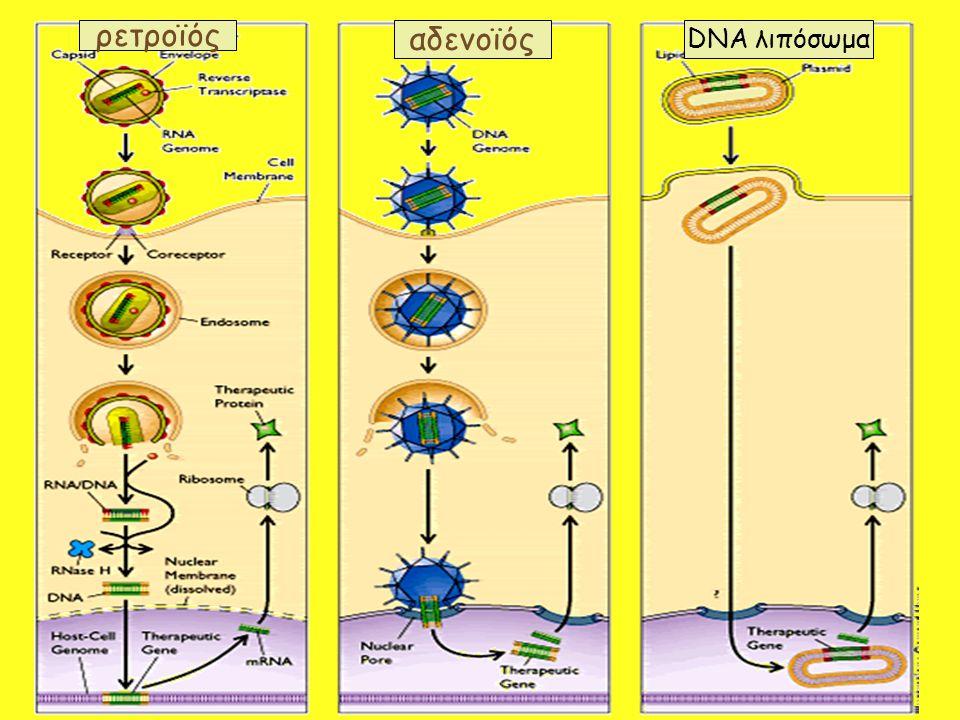 ρετροϊός αδενοϊός DNA λιπόσωμα