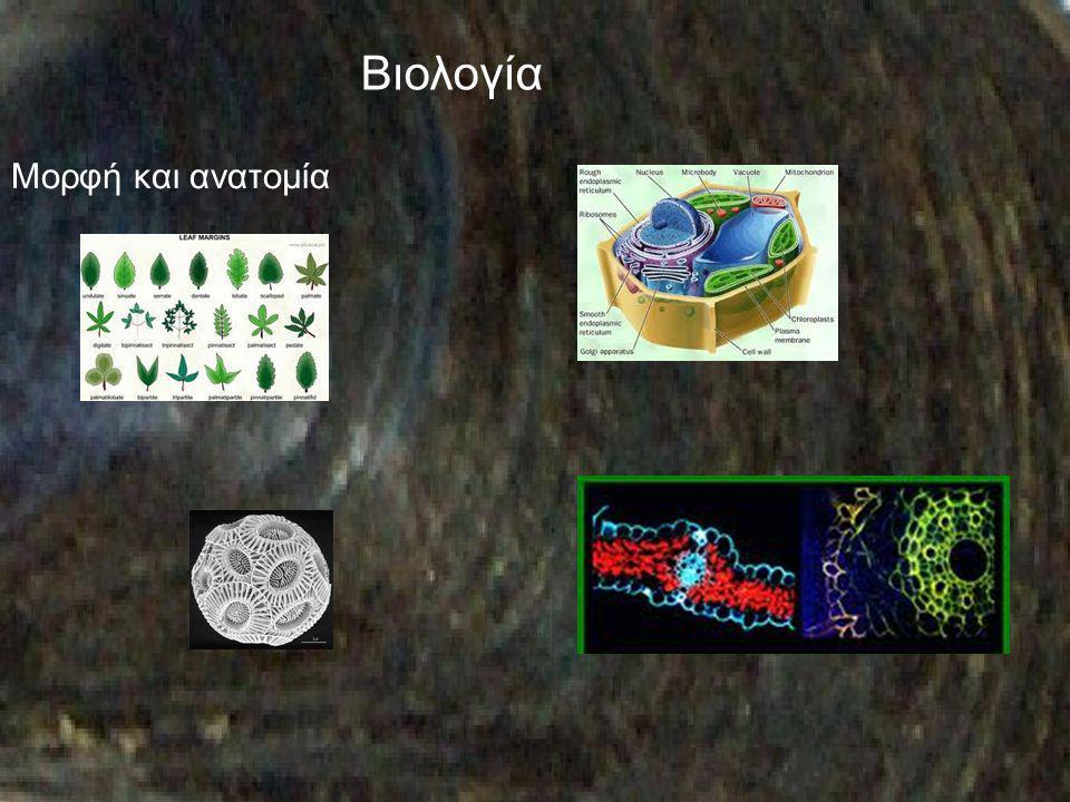 Βιολογία Μορφή και ανατομία