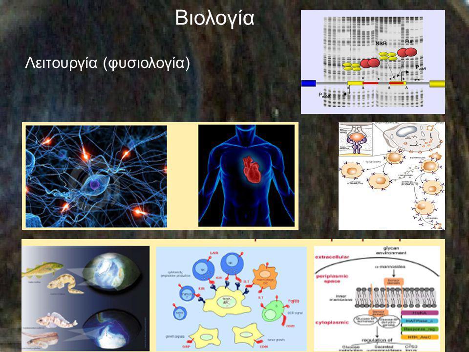 Βιολογία Λειτουργία (φυσιολογία)