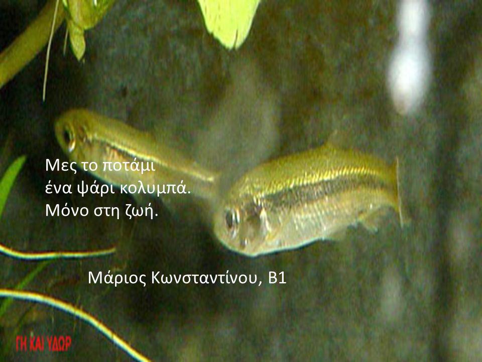 Μες το ποτάμι ένα ψάρι κολυμπά. Μόνο στη ζωή. Μάριος Κωνσταντίνου, Β1