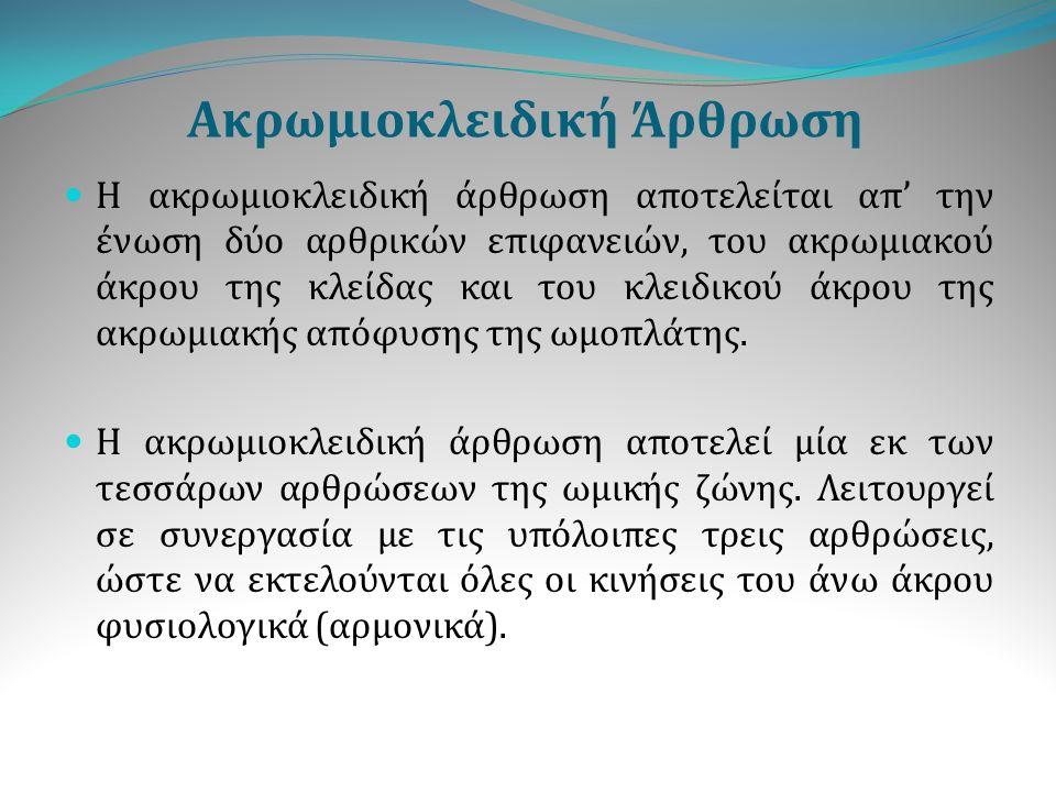 Ακρωμιοκλειδική Άρθρωση Η ακρωμιοκλειδική άρθρωση αποτελείται απ ' την ένωση δύο αρθρικών επιφανειών, του ακρωμιακού άκρου της κλείδας και του κλειδικ