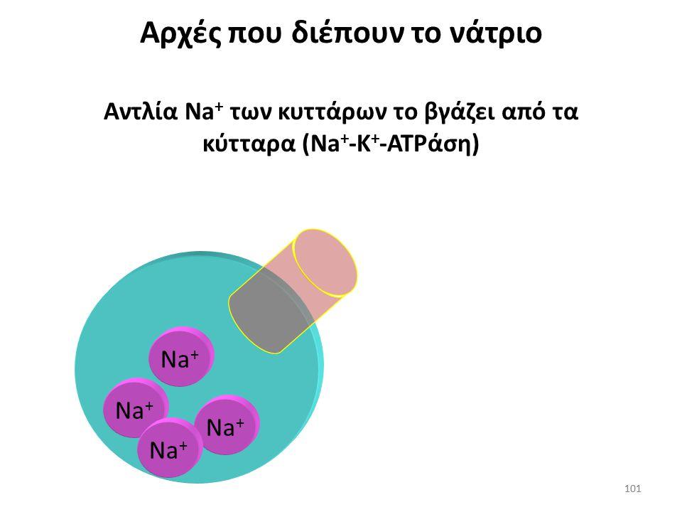 100 Αρχές που διέπουν το Na + Το Na + δεν διέρχεται διαμέσου των κυτταρικών μεμβρανών τόσο γρήγορα όσο το Η 2 Ο Na + H2OH2O H2OH2O H2OH2O H2OH2O H2OH2