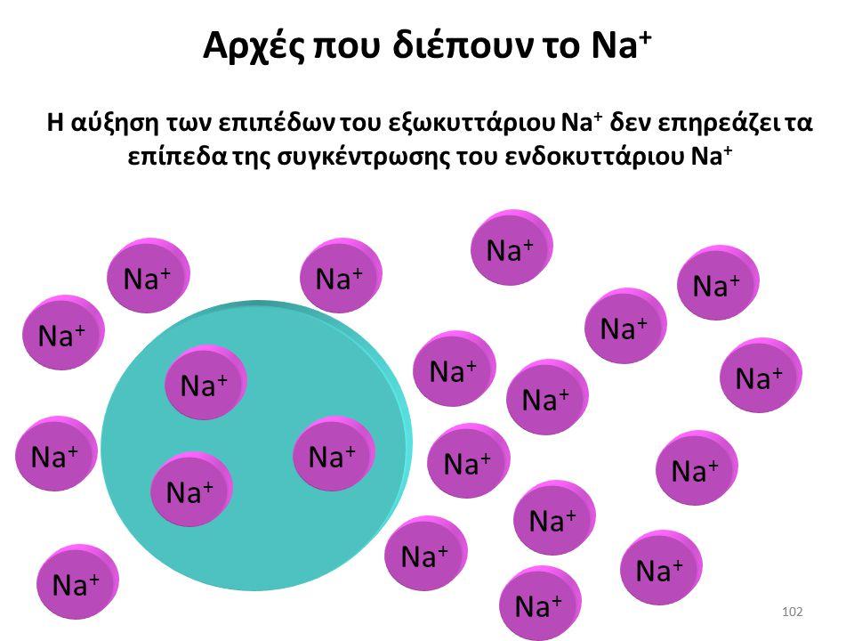 101 Αντλία Na + των κυττάρων το βγάζει από τα κύτταρα (Na + -K + -ATPάση) Na + Αρχές που διέπουν το νάτριο 101