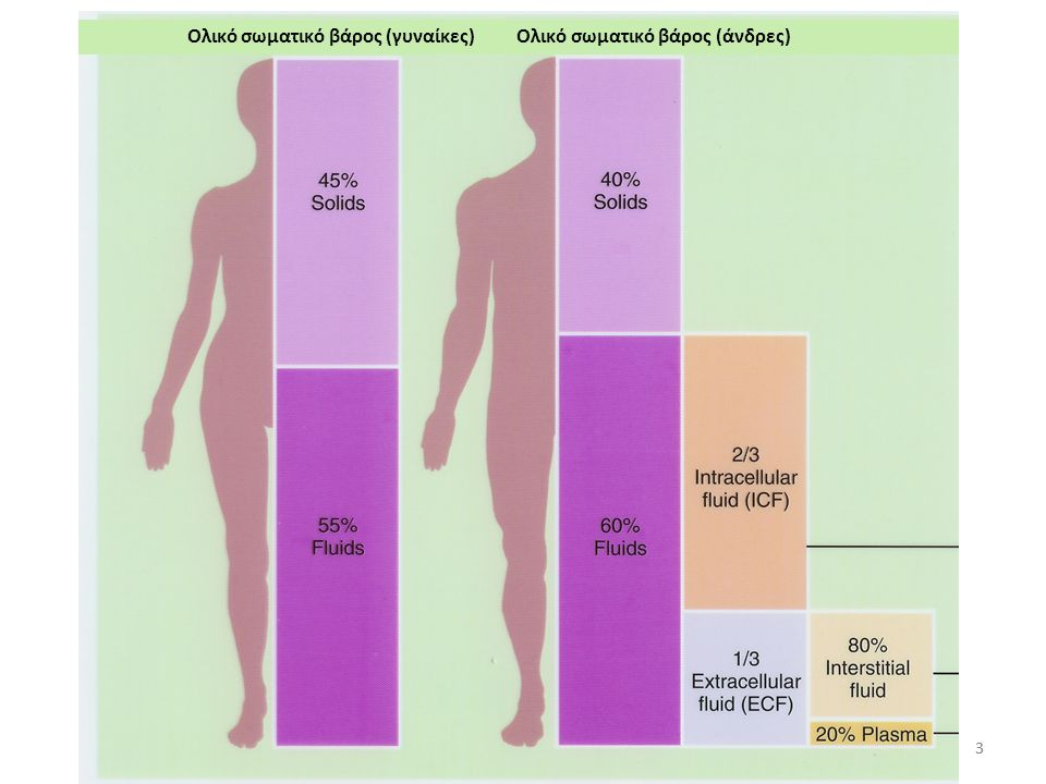 113 Το μεγαλύτερο ποσοστό του ύδατος στον οργανισμό σε ποιο διαμέρισμα βρίσκεται; α) Εξωκυττάριο; β) Ενδοκυττάριο; γ) Διάμεσο; δ) Πλάσμα του αίματος;