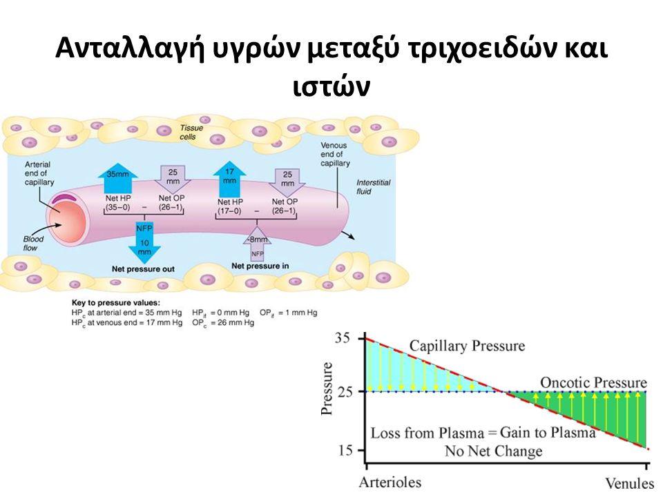 30 Μετακίνηση υγρών στα τριχοειδή Η ποσότητα και η κατεύθυνση μετακίνησης προσδιορίζονται από:  Την τριχοειδική υδροστατική πίεση  Την ΚΩΠ του πλάσμ