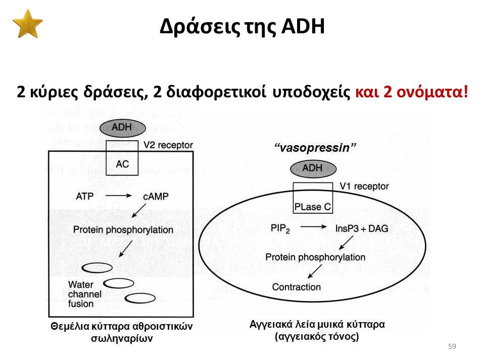 58 ADH (αντιδιουρητική ορμόνη) 58