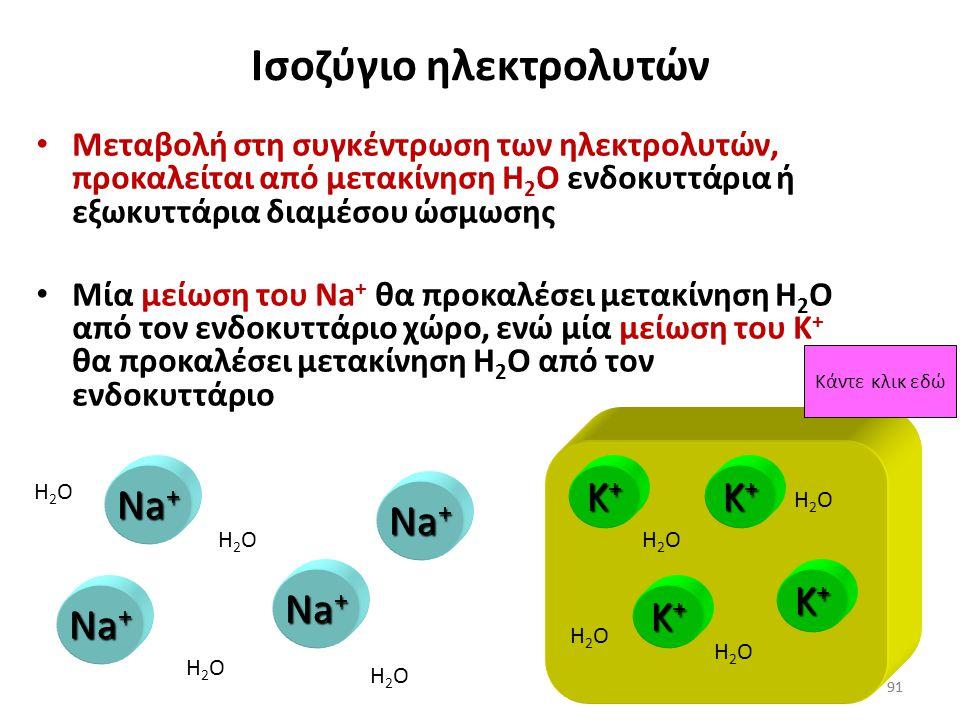 90 Ισοζύγιο ηλεκτρολυτών Η μετακίνηση ύδατος μεταξύ διαμέσου και ενδοκυττάριου χώρου ελέγχεται κυρίως από την παρουσία ή απουσία του Na + και K + Na +