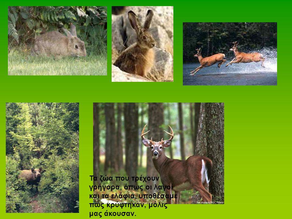 Τα ζώα που τρέχουν γρήγορα, όπως οι λαγοί και τα ελάφια, υποθέσαμε πως κρύφτηκαν, μόλις μας άκουσαν.