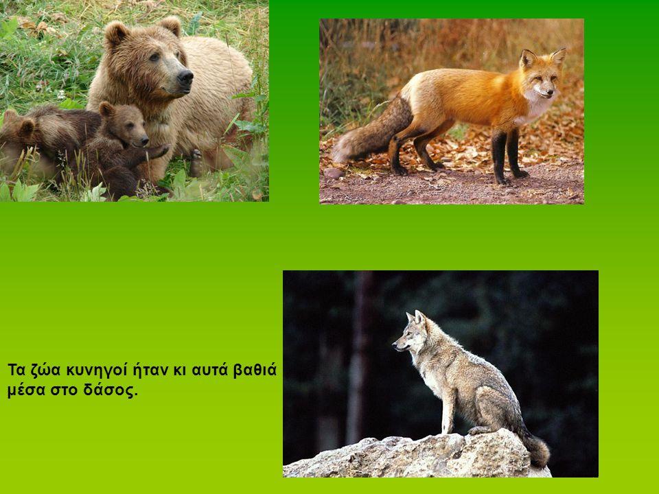 Τα ζώα κυνηγοί ήταν κι αυτά βαθιά μέσα στο δάσος.