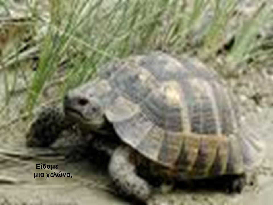 Είδαμε μια χελώνα,