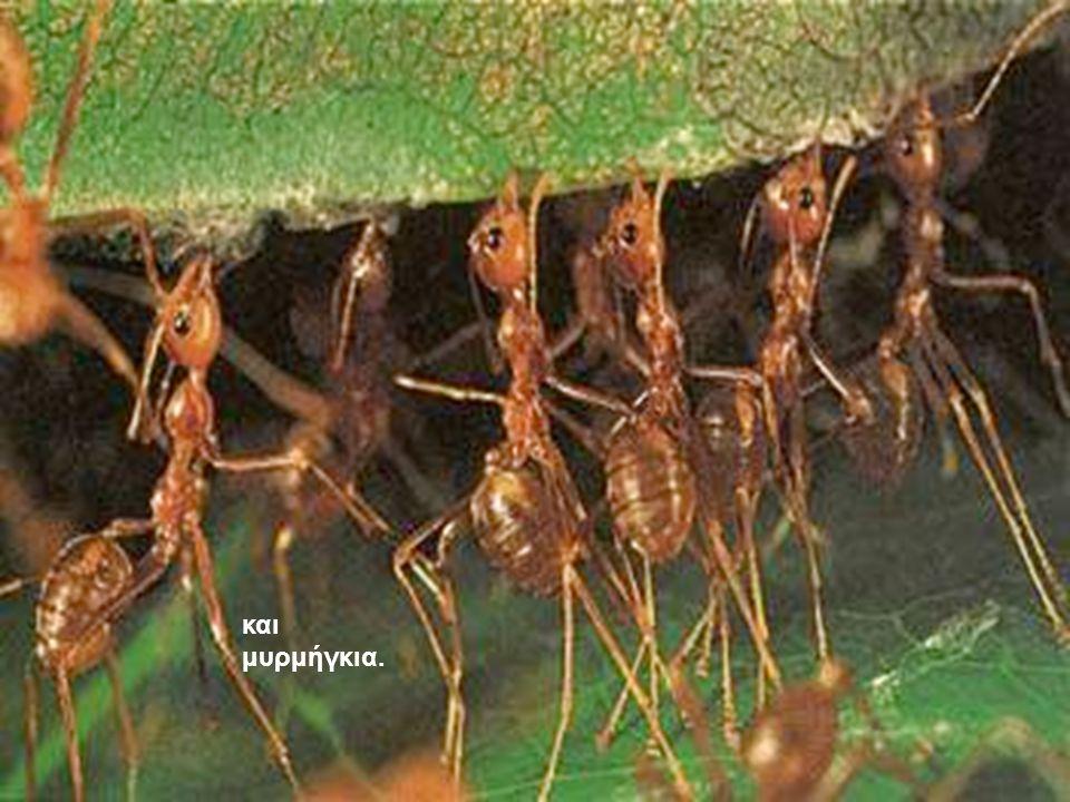 και μυρμήγκια.