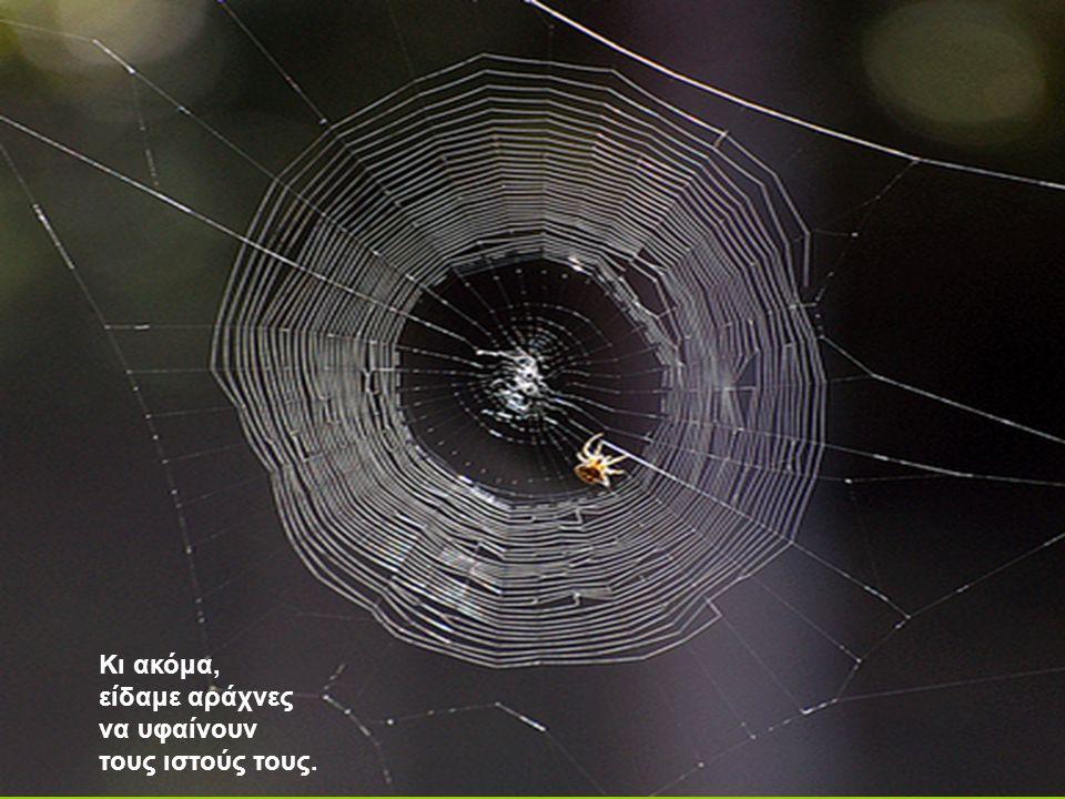 Κι ακόμα, είδαμε αράχνες να υφαίνουν τους ιστούς τους.